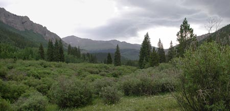 High Valley Meadow -- 10,200 feet